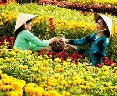 Làng hoa Sa Đéc - Đồng Tháp